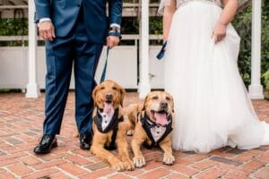 Fur Babies_Ring Bearers